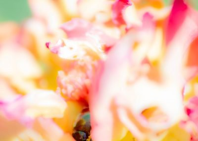 Abstract Photography